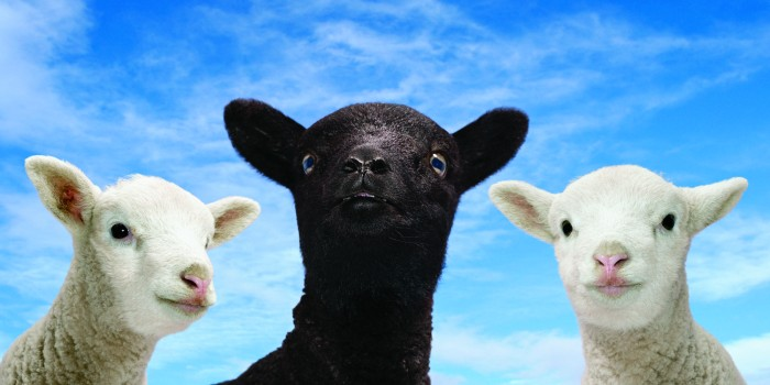 Bah Bah Black Sheep
