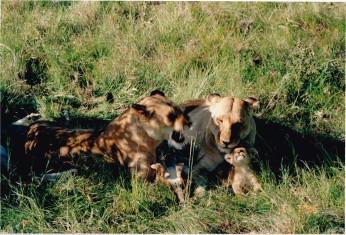 kili-1996_0020